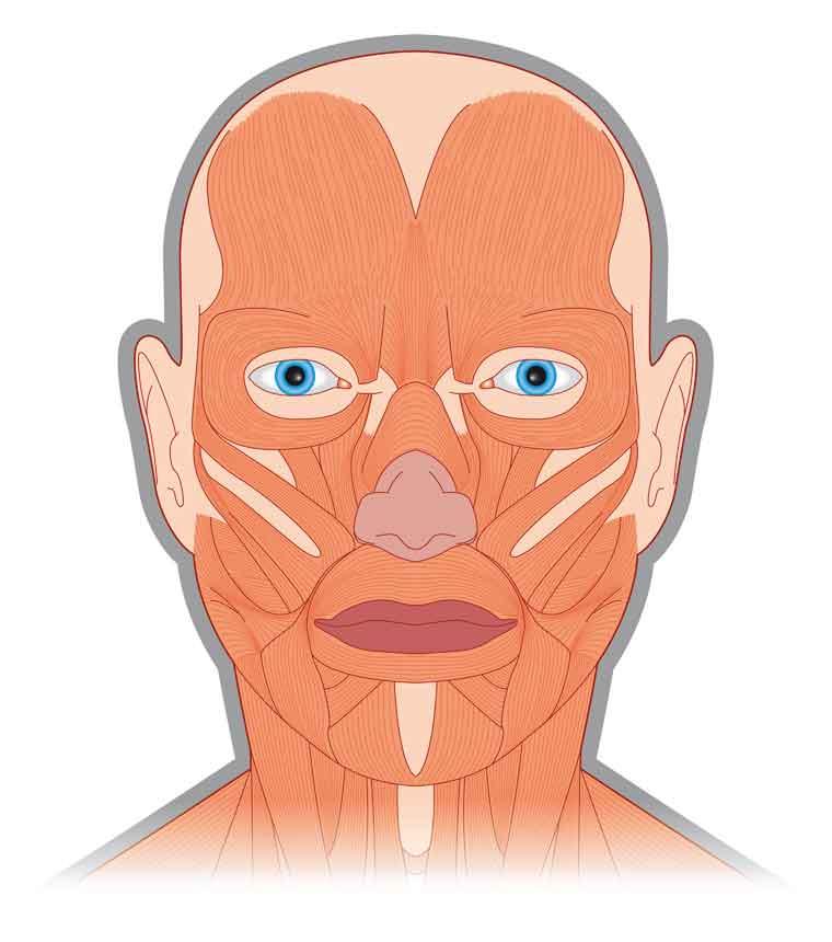 顔の筋肉は閉じる筋肉。外敵から身を守る役割を果たす。