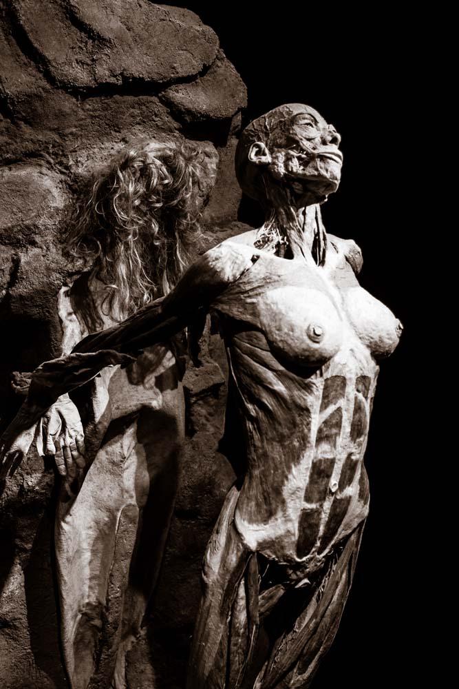 皮膚を剥がされる死体標本