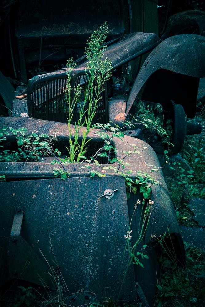 オラドゥール=シュル=グラヌの車から伸びる雑草