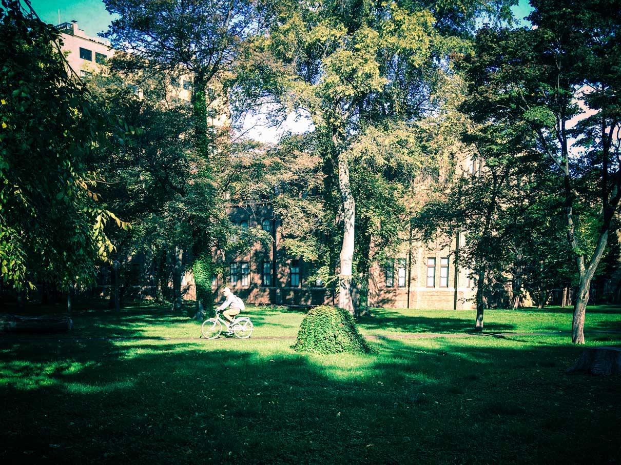 緑のキャンパス
